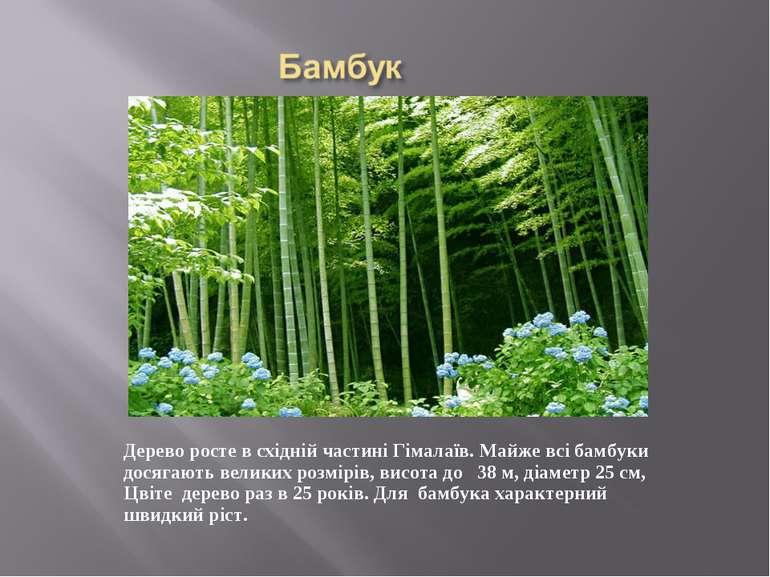 Дерево росте в східній частині Гімалаїв. Майже всі бамбуки досягають великих ...