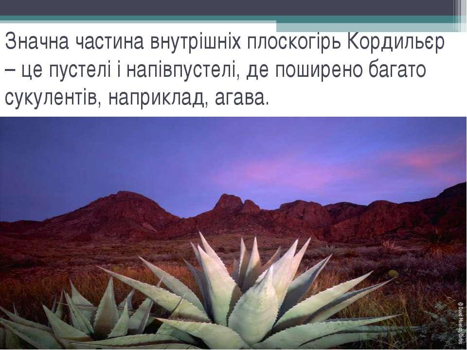 Значна частина внутрішніх плоскогірь Кордильєр – це пустелі і напівпустелі, д...