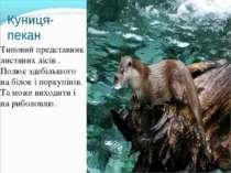 Куниця-пекан Типовий представник листяних лісів . Полює здебільшого на білок ...