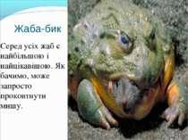 Жаба-бик Серед усіх жаб є найбільшою і найцікавішою. Як бачимо, може запросто...