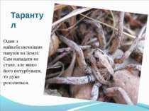 Тарантул Один з найнебезпечніших павуків на Землі. Сам нападати не стане, але...