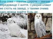 Біла сова – північні широти – звичне середовище її життя. Суворий клімат не с...