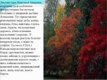 Листяні ліси Північної Америки відрізняються особливим флористичним багатство...