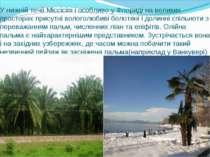 У нижній течії Міссісіпі і особливо у Флориді на великих просторах присутні в...