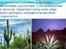 Рослинність пустель і напівпустель представлена колючими чагарниками і числен...