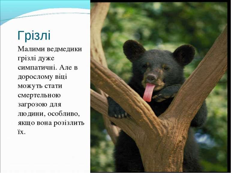 Грізлі Малими ведмедики грізлі дуже симпатичні. Але в дорослому віці можуть с...