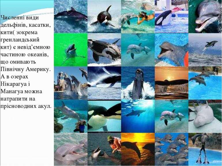 Численні види дельфінів, касатки, кити( зокрема гренландський кит) є невід'єм...