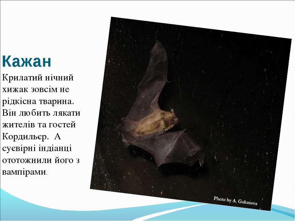 Кажан Крилатий нічний хижак зовсім не рідкісна тварина. Він любить лякати жит...