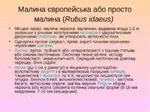 Малина європейська або просто малина (Rubus idaeus) Місцеві назви: малина чер...