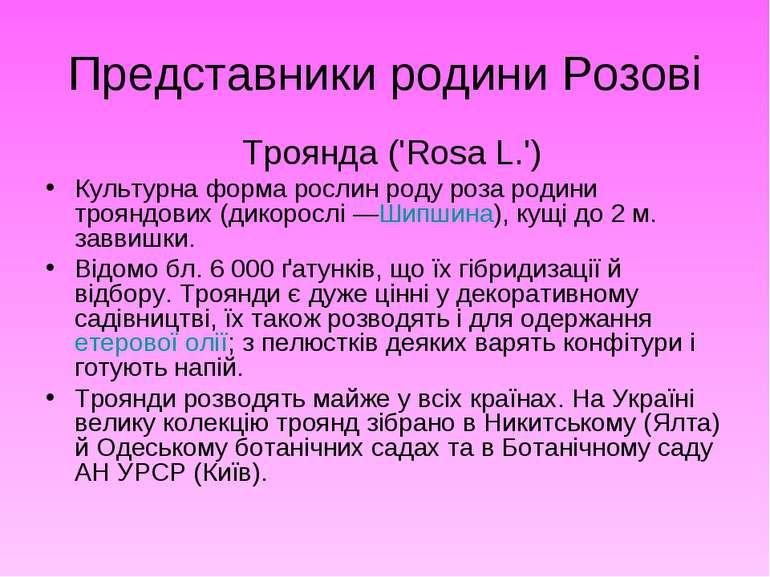 Представники родини Розові Троянда ('Rosa L.') Культурна форма рослин роду ро...