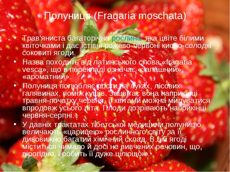 Полуниця (Fragaria moschata) Трав'яниста багаторічна рослина, яка цвіте білим...