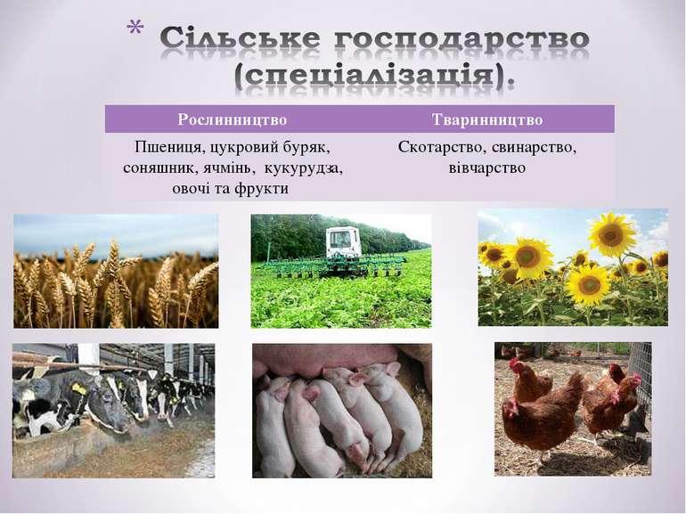 Рослинництво Тваринництво Пшениця, цукровий буряк, соняшник, ячмінь, кукурудз...