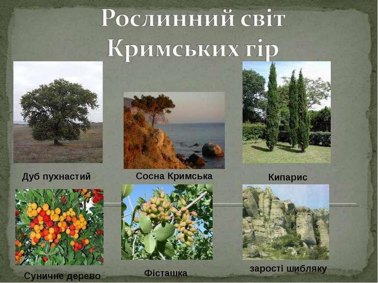 Дуб пухнастий Сосна Кримська Кипарис Суничне дерево Фісташка зарості шибляку