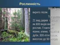 96% Пущі вкрито лісом. 96% Пущі вкрито лісом. Тут росте 21 вид дерев і більш ...
