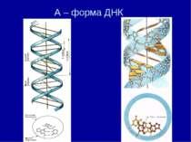 А – форма ДНК