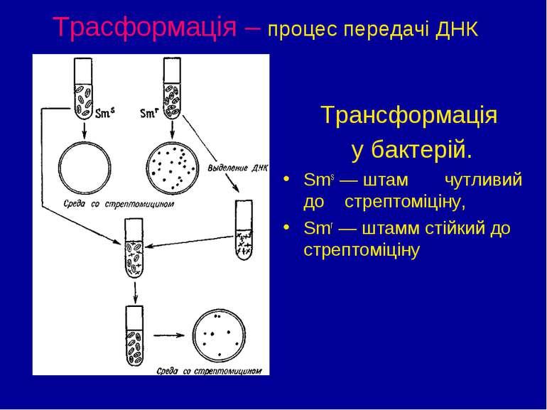 Трасформація – процес передачі ДНК Трансформація у бактерій. Sms — штам чутли...