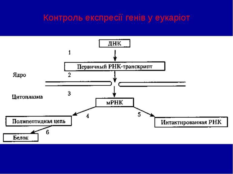 Контроль експресії генів у еукаріот