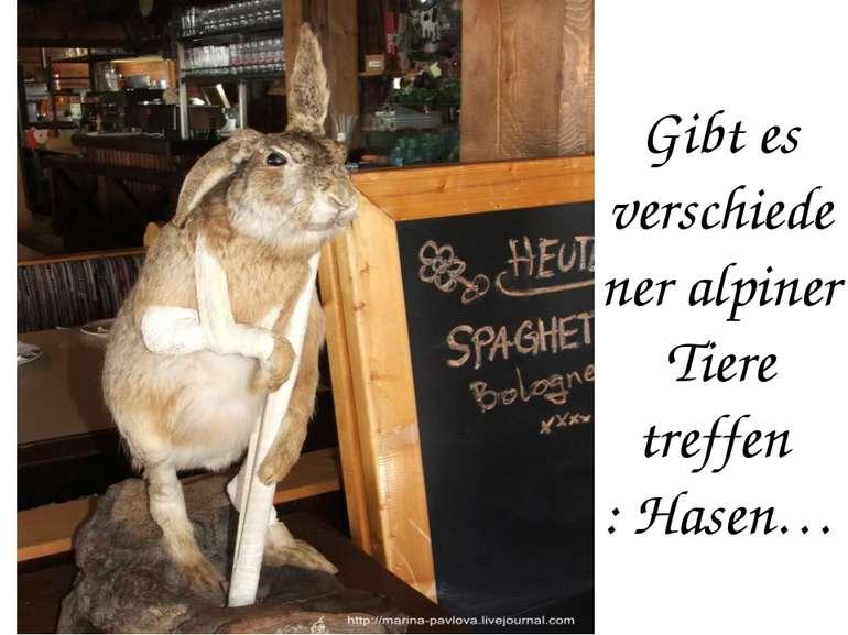 Gibt es verschiedener alpiner Tiere treffen : Hasen…