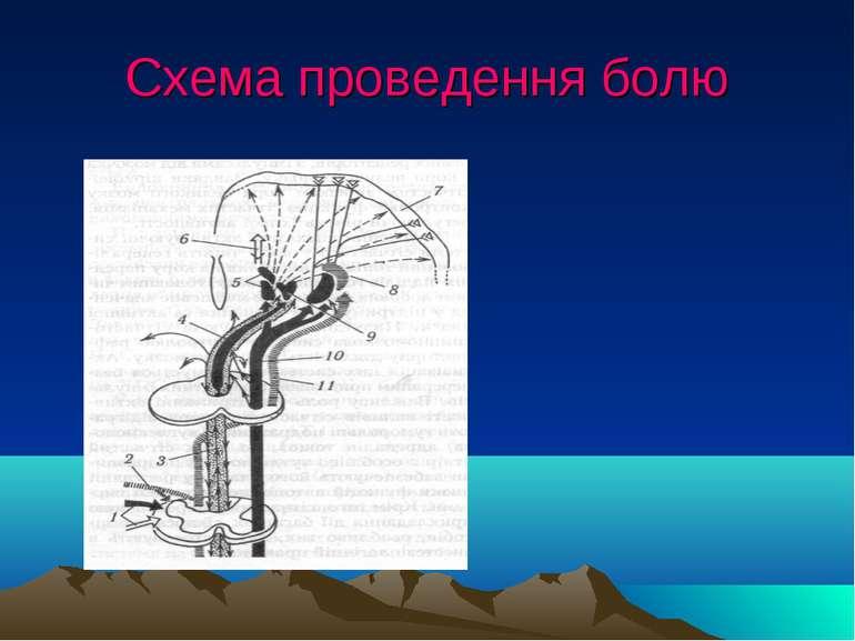 Схема проведення болю