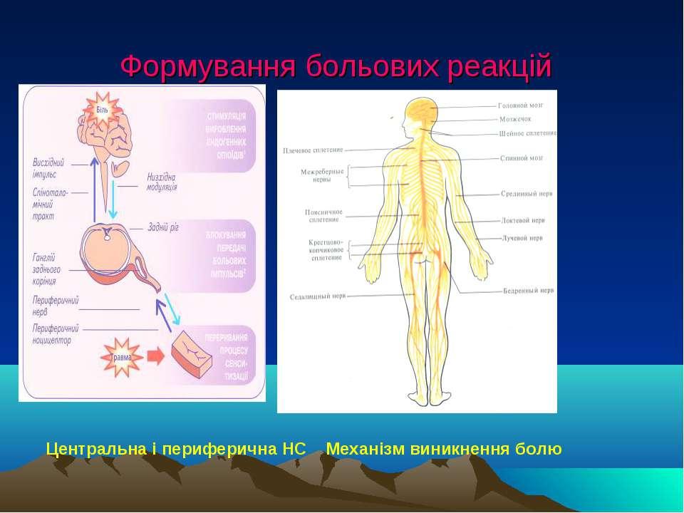 Формування больових реакцій Центральна і периферична НС Механізм виникнення болю