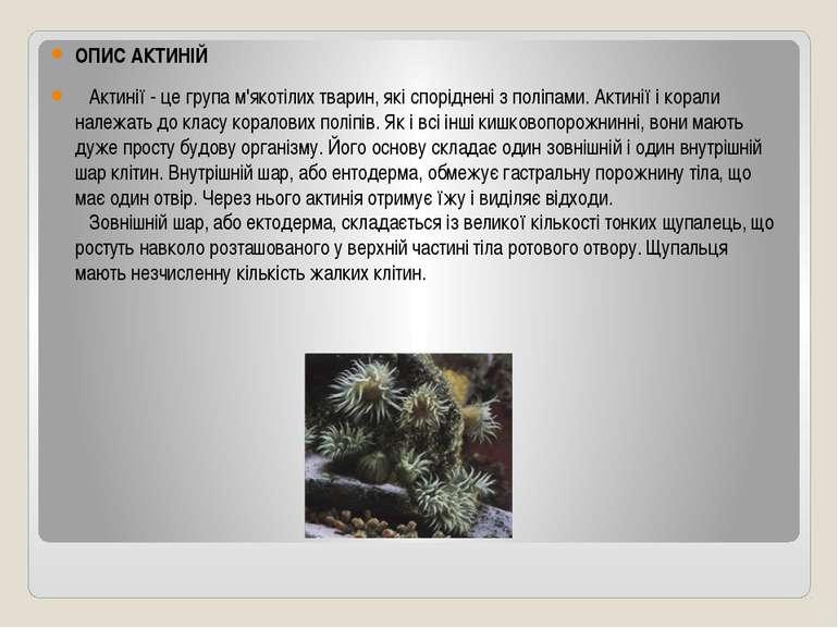 ОПИС АКТИНІЙ  Актинії - це група м'якотілих тварин, які споріднені з поліпа...