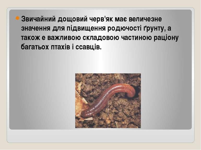 Звичайний дощовий черв'як має величезне значення для підвищення родючості ґру...