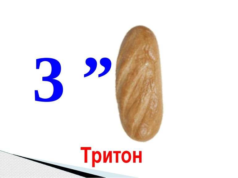 """3 """" Тритон"""