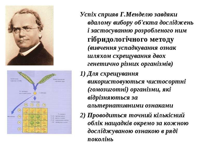 Успіх сприяв Г.Менделю завдяки вдалому вибору об'єкта досліджень і застосуван...