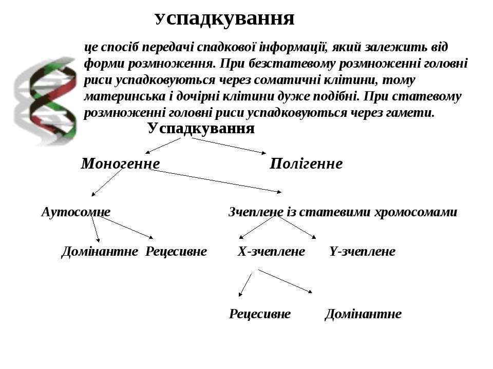 це спосіб передачі спадкової інформації, який залежить від форми розмноження....