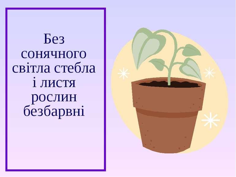 Без сонячного світла стебла і листя рослин безбарвні