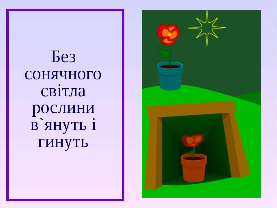 Без сонячного світла рослини в`януть і гинуть