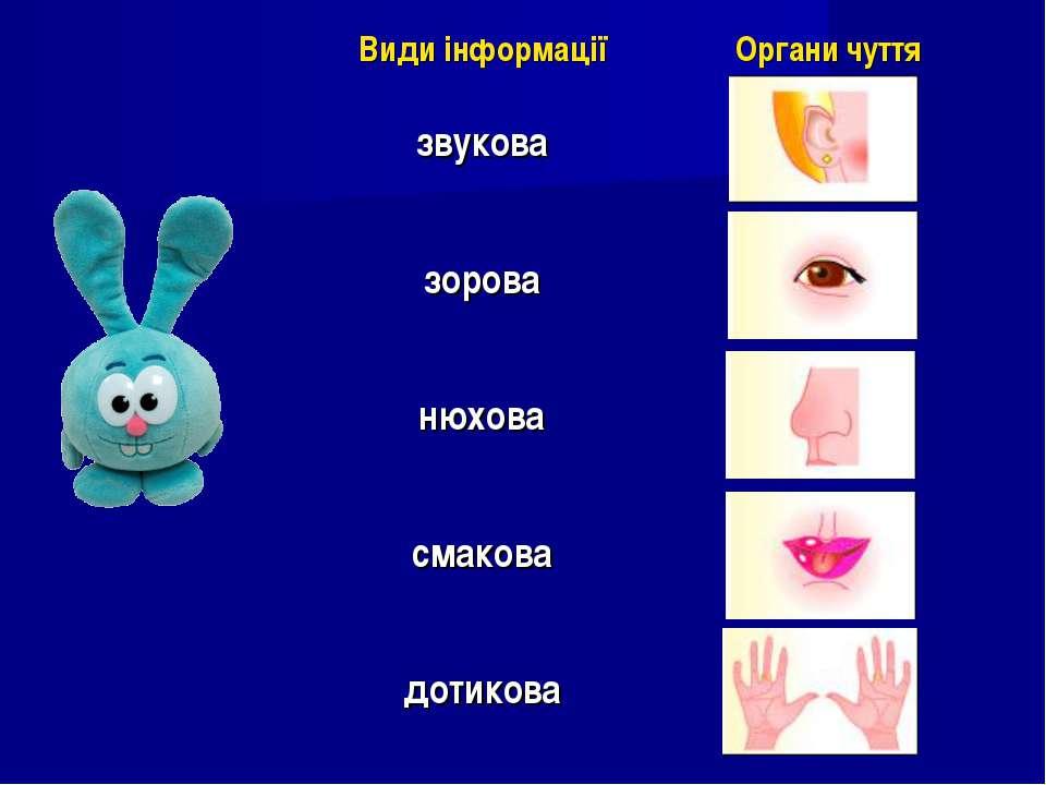 Види інформації Органи чуття звукова зорова нюхова смакова дотикова