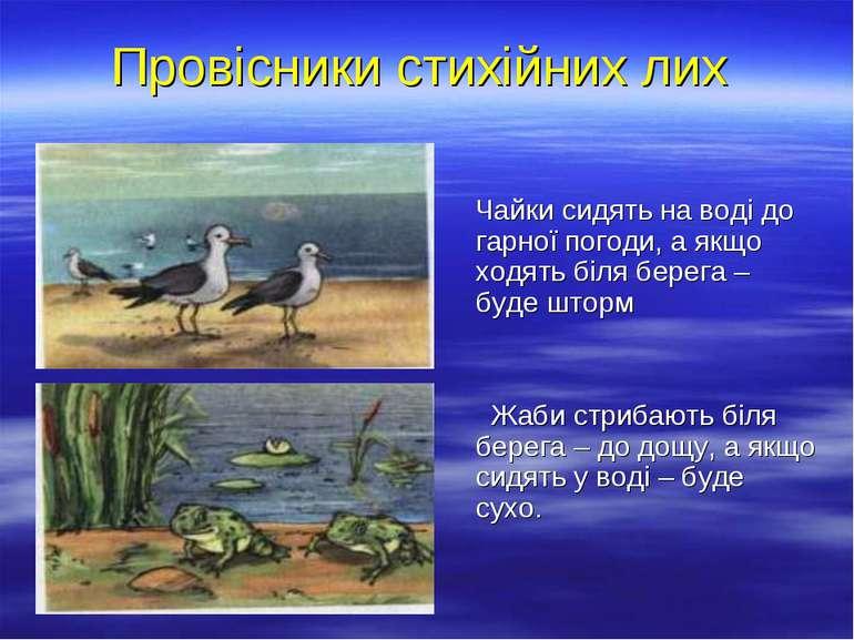 Провісники стихійних лих Чайки сидять на воді до гарної погоди, а якщо ходять...