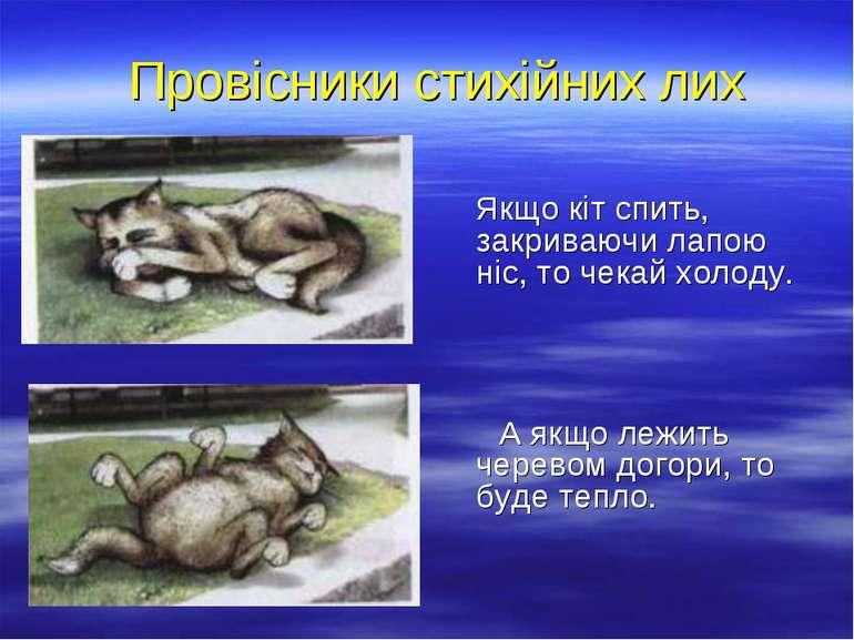Провісники стихійних лих Якщо кіт спить, закриваючи лапою ніс, то чекай холод...