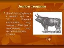 Зниклі тварини Дикий бик зустрічався в нашому краї до ХVІІ ст. Останній предс...