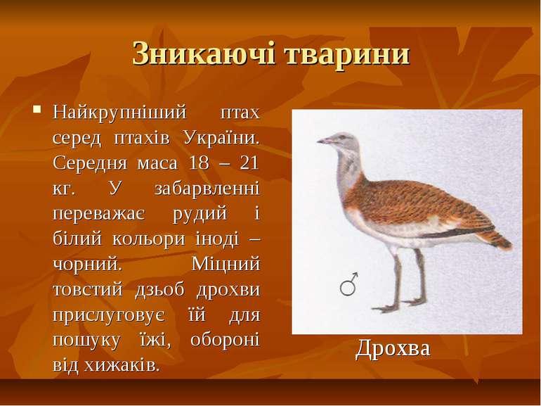 Зникаючі тварини Найкрупніший птах серед птахів України. Середня маса 18 – 21...