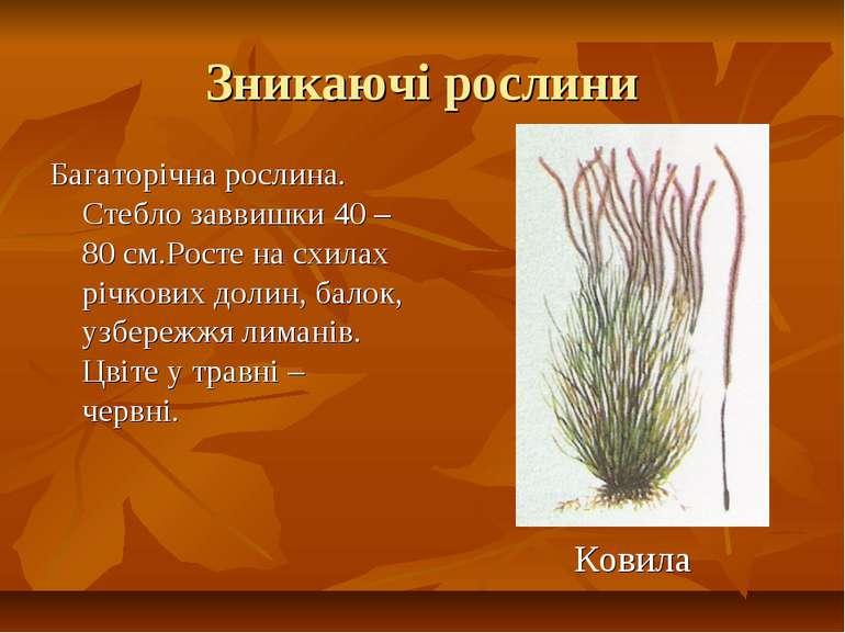 Зникаючі рослини Багаторічна рослина. Стебло заввишки 40 – 80 см.Росте на схи...