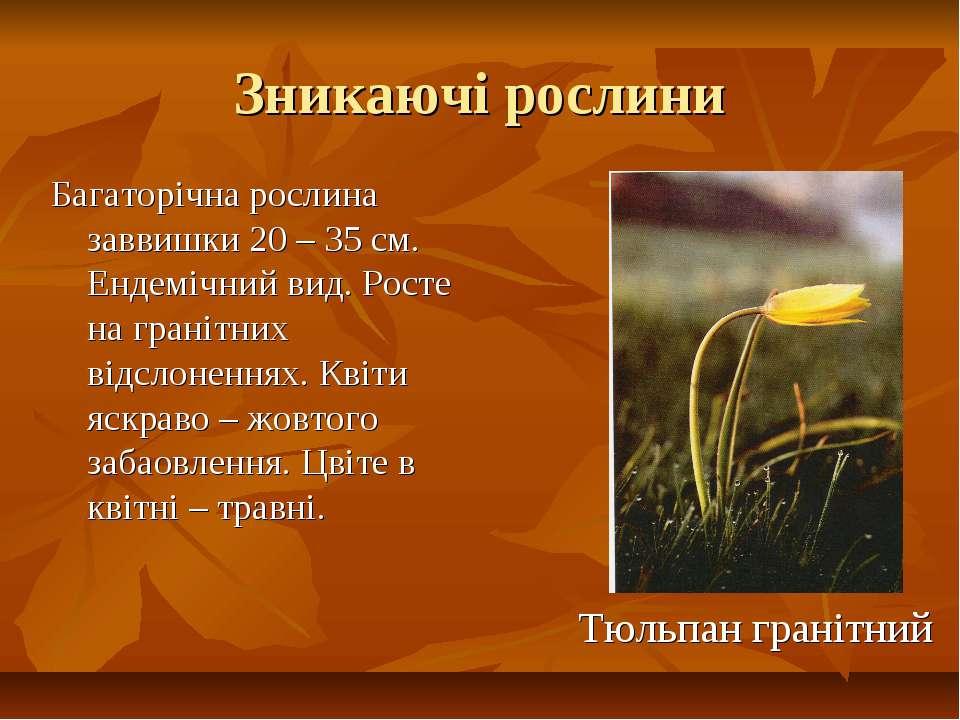 Зникаючі рослини Багаторічна рослина заввишки 20 – 35 см. Ендемічний вид. Рос...