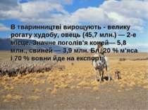 В тваринництві вирощують - велику рогату худобу, овець (45,7 млн.) — 2-е місц...