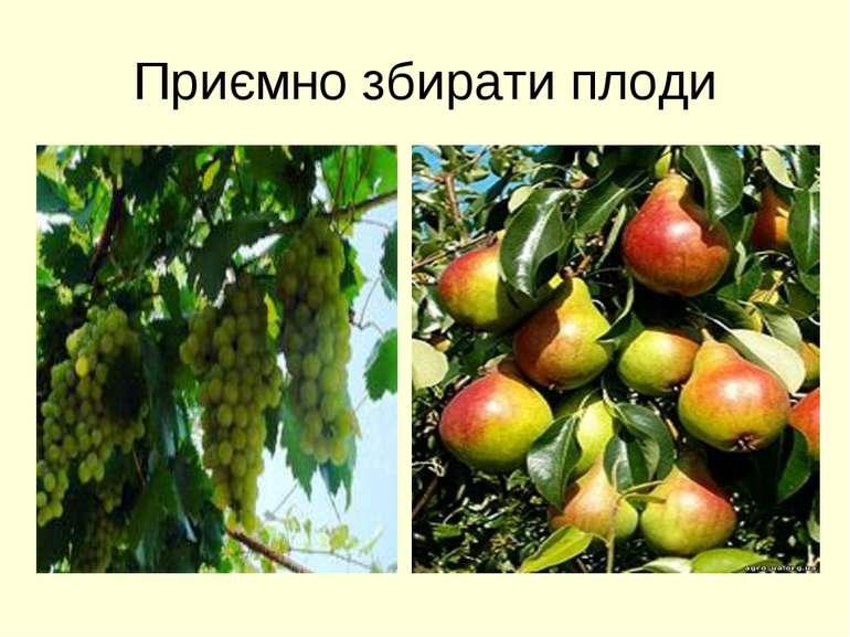 Приємно збирати плоди