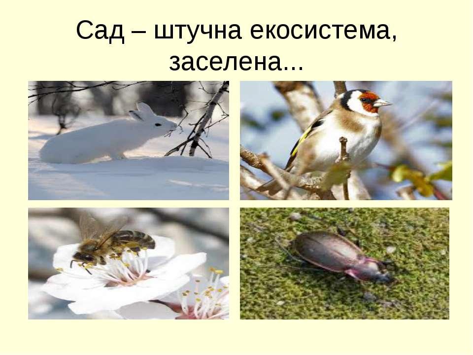 Сад – штучна екосистема, заселена...