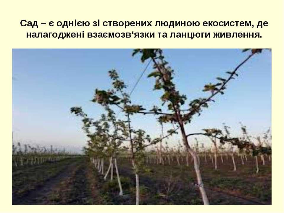 Сад – є однією зі створених людиною екосистем, де налагоджені взаємозв'язки т...