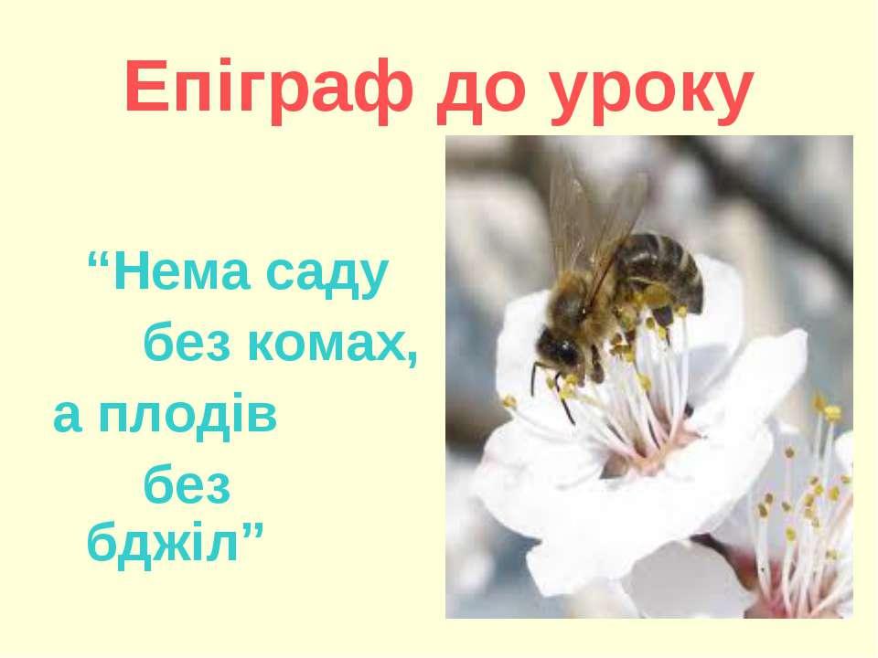 """Епіграф до уроку """"Нема саду без комах, а плодів без бджіл"""""""