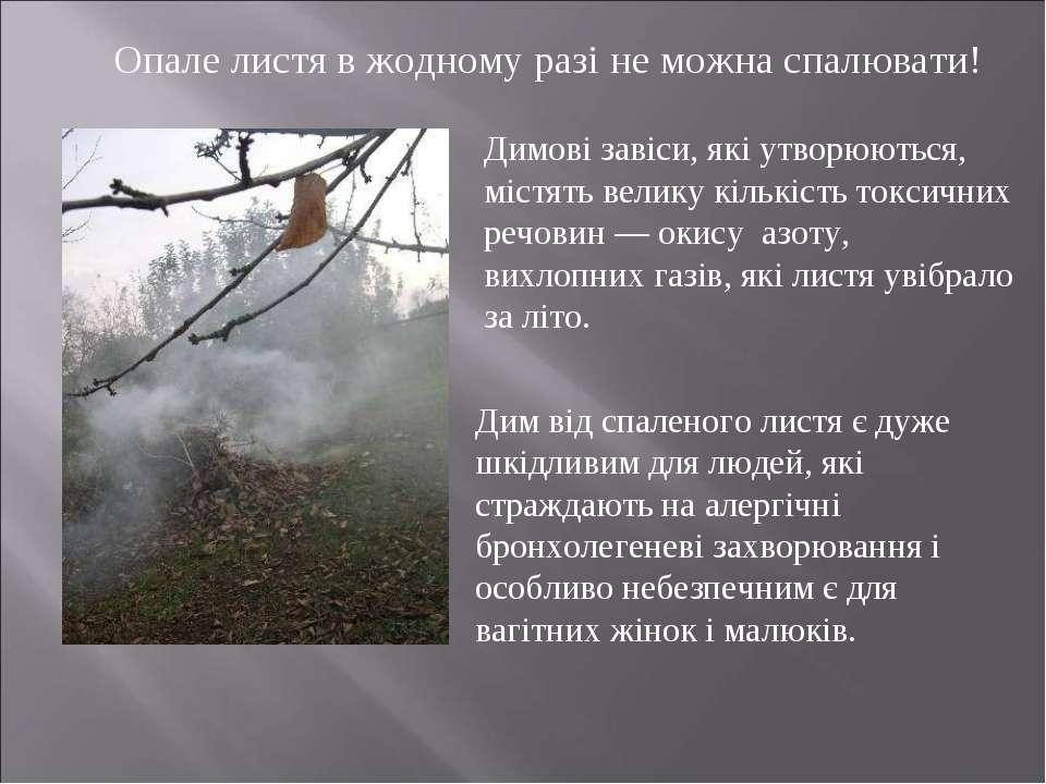 Опале листя в жодному разі не можна спалювати! Димові завіси, які утворюються...
