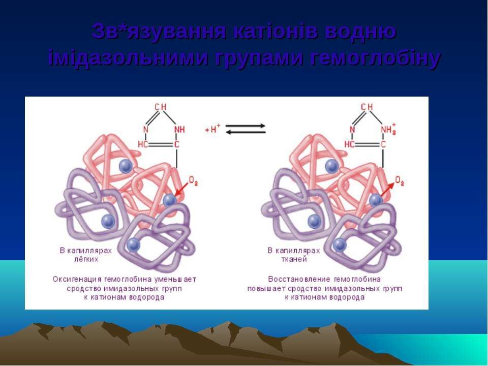 Зв*язування катіонів водню імідазольними групами гемоглобіну