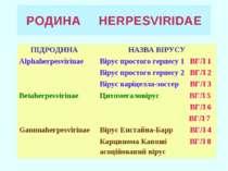 РОДИНА HERPESVIRIDAE ПІДРОДИНА НАЗВА ВІРУСУ Alphaherpesvirinae Вірус простого...