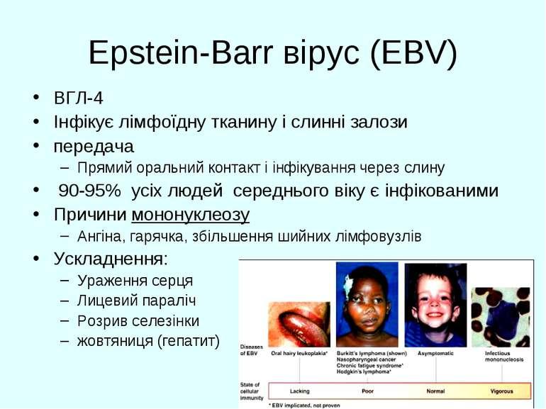 Epstein-Barr вірус (EBV) ВГЛ-4 Інфікує лімфоїдну тканину і слинні залози пере...