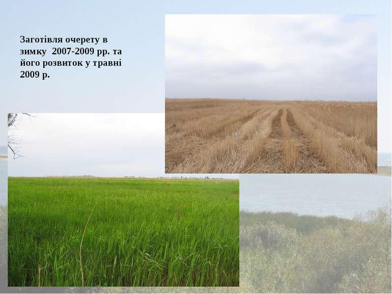 Заготівля очерету в зимку 2007-2009 рр. та його розвиток у травні 2009 р.