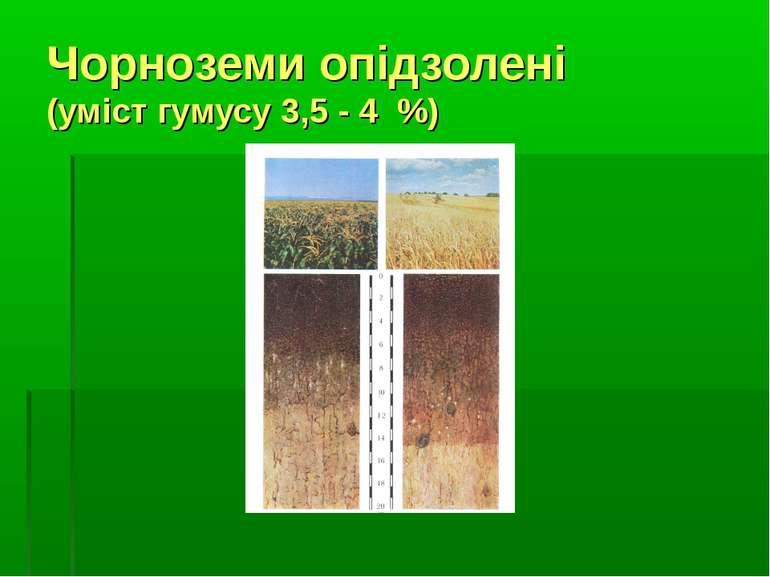 Чорноземи опідзолені (уміст гумусу 3,5 - 4 %)
