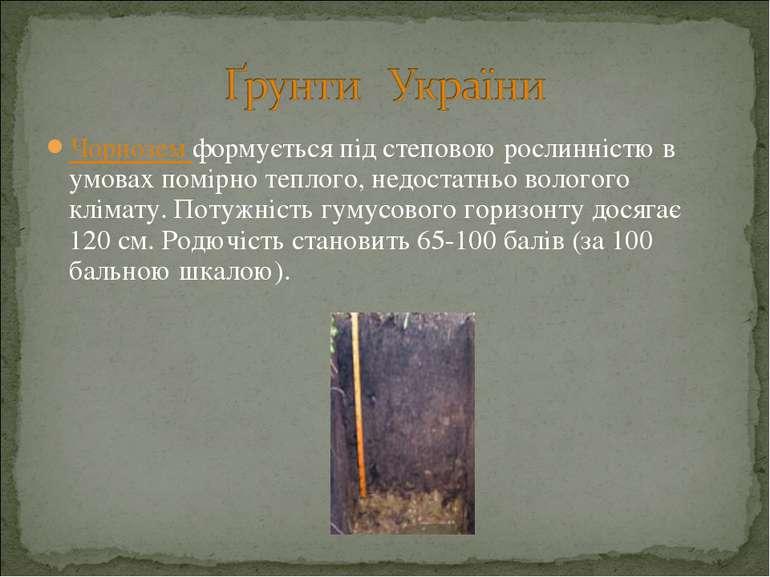 Чорнозем формується під степовою рослинністю в умовах помірно теплого, недост...